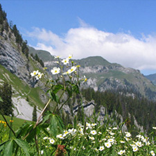 flowers-and-mountains_square